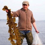 Just seaweed? No, an essential ingredient