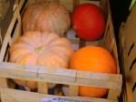 Pumpkin Delights