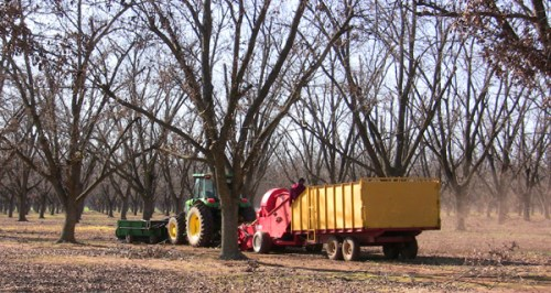 A pecan harvester
