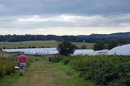 Craigies PYO fruit farm.