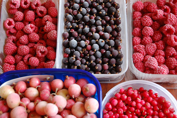 Freezing is another good way to preserve fruits for use in winter.