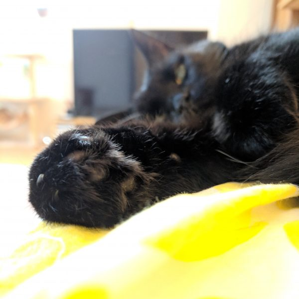 Why a picture of my cat? Because this is how eating chocolate usually makes me feel: mellow, paws relaxed.