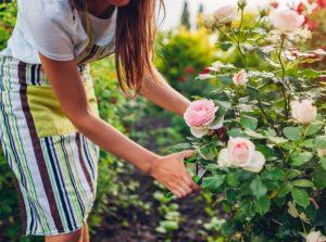 γυναίκα περιποιείται τα φυτά του σπιτιού