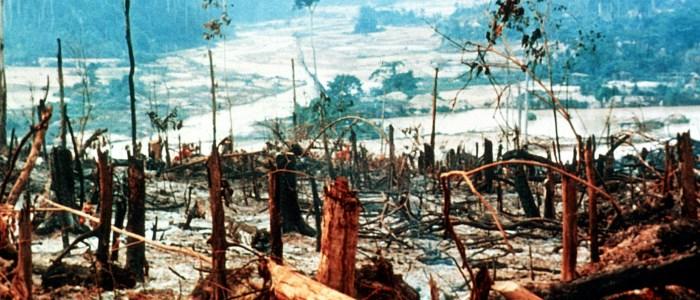 deforestation-in-brazil