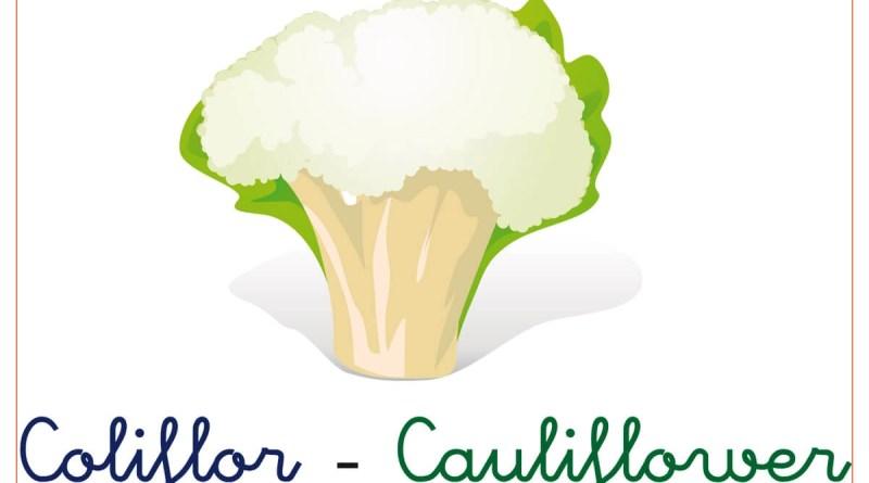 verduras y hortalizas 15