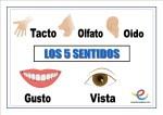 Fichas de infantil: Los 5 sentidos