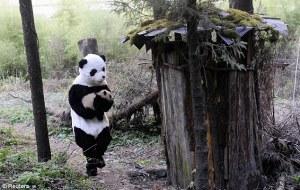 Pandanappers!