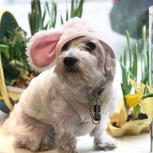 Glad påsk önskar Egoists egna påskhare och personal!
