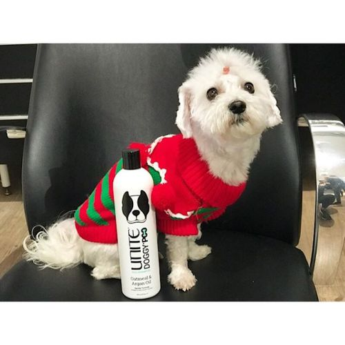 Idag poserar en nybadad penny i sin tomtenissetröja bredvid sitt favoritschampoo Doggypoo från Unite.Vid försäljning av Doggypoo hundschampo går all vinst oavkortat till hundstallet! Pris 279kr