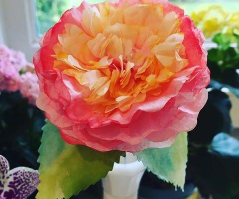 Paper Flower Party Recap: Week 2