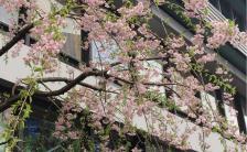 次は17年後! 4日土曜の<br>皆既月食と桜を見逃さないで