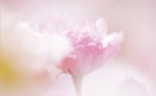 感情美人への道Vol.29 〜困難の中に意味を見つけよう〜  Find True Meaning in Hard Times