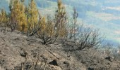 Imagen del terreno tras el incendio en Vega de Espinareda (C.Sánchez)