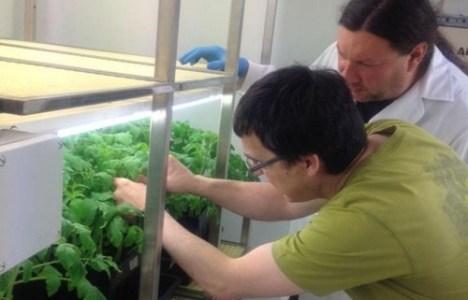 Santiago Gutiérrez y José Álvarez tratando un cultivo hidropónico de hongo-planta