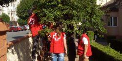 Imagen de los voluntarios recogiendo las ciruelas.