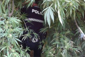 detenido-drogas