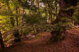 peñacaira otoño quinito