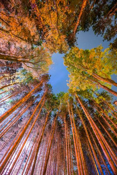Electric Forest Wallpapers | Electric Forest