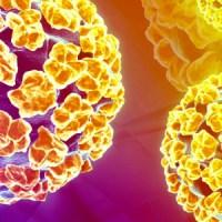 Papilloma virus: non siamo sole