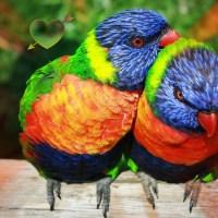 Al via le nozze arcobaleno