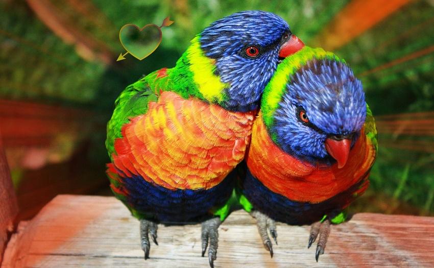 Nozze arcobaleno