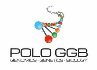 Polo GGB