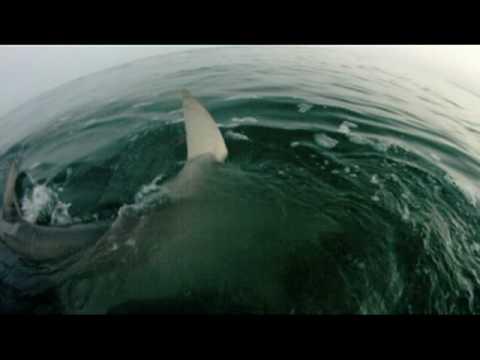 Un tarpon, uno squalo e…tanta follia