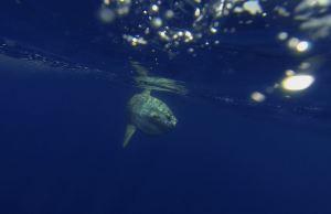 Luna underwater