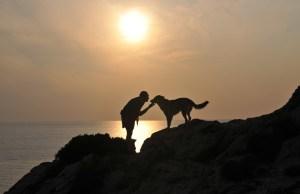 cane al tramonto
