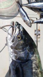 Che pesce