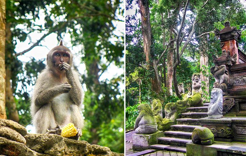 Ubud Bucket List - Monkey Forest