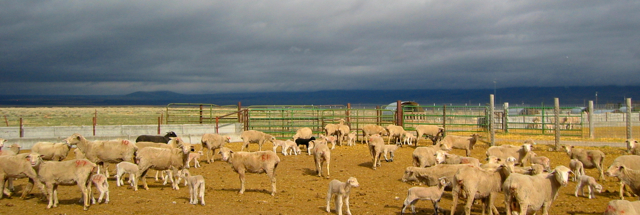 sheep-experiment-station-panorama
