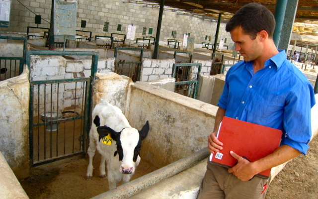 Food Safety: Audit of Dairy Farm in Egypt.