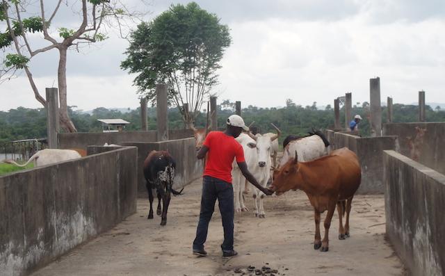 Liberia-agriculture-veterinarian
