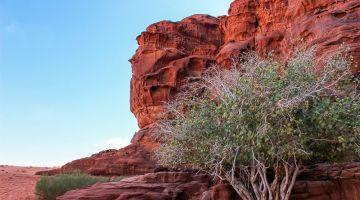 Wadi Rum, con los 6 sentidos bien expuestos