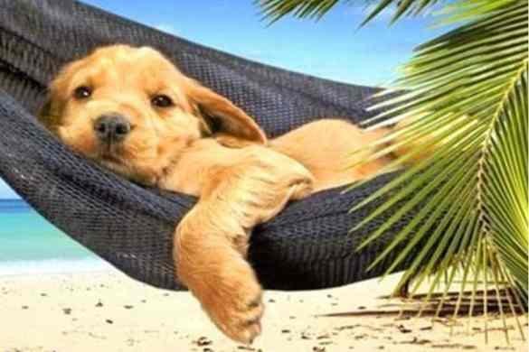 Vacaciones de nuestras mascotas