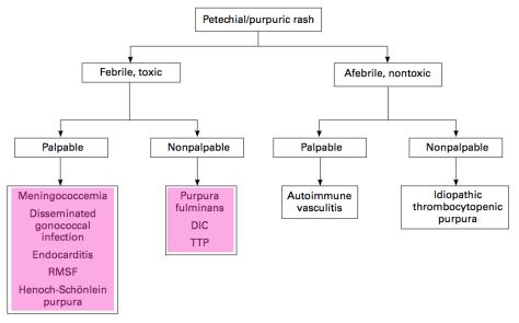 petechiael rashes highlight