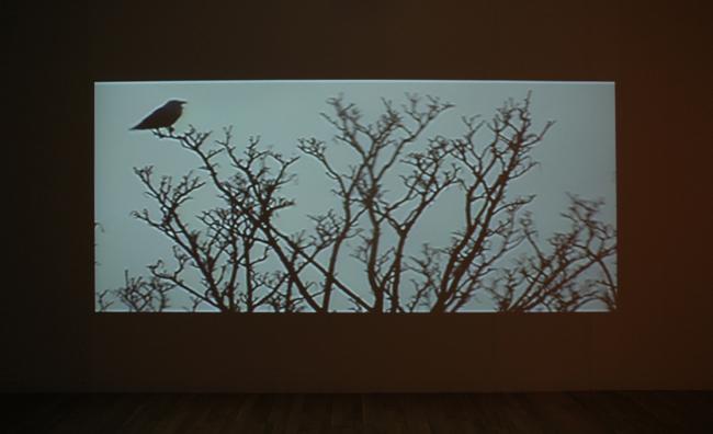 TERRY SMITH Broken Voices, 2007, film installation