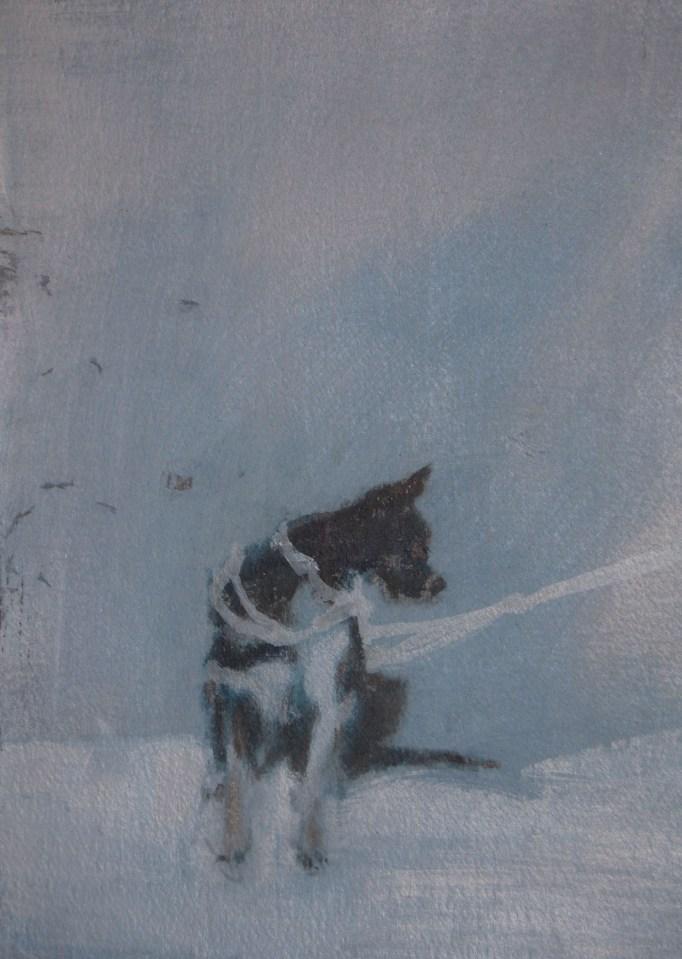 REBECCA SITAR Husky, 2013, oil on paper, 29 x 17cm