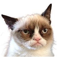 grumpy cat tardar sauce