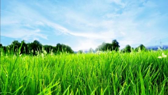 Imagem-Grama-Verde