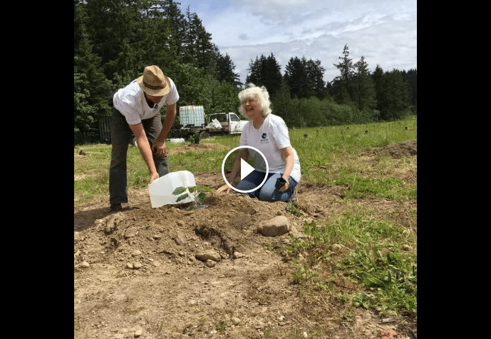 Planting the Way to a Sustainable Future