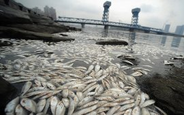 Dead Fish End Times