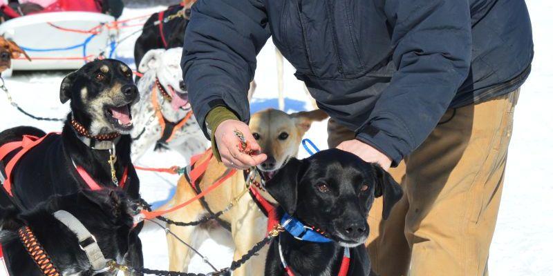 dog sledding, dog sled rides, dog sled tours