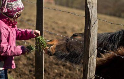enfant-donnant-à-manger-herbe-verte-à-cheval