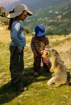 marmotte-et-enfants dans les alpes