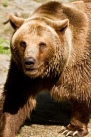 ours-au-zoo-de-bratislava
