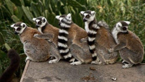 voyage-enfant-esterel-famille-zoo-fréjus