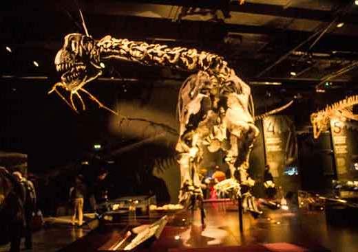 musée-des-confluences-dinosaures