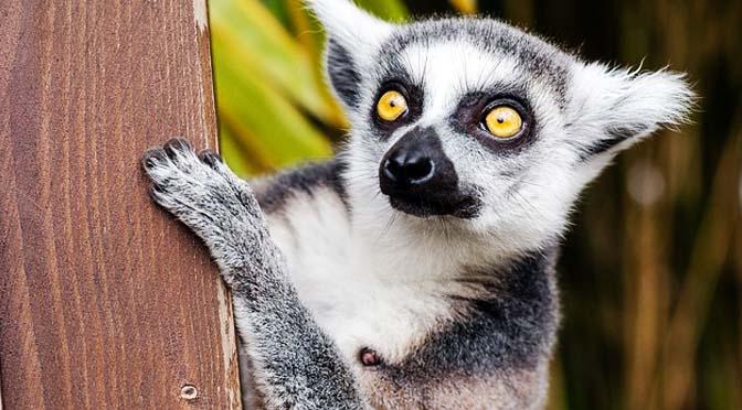 5 curiosos comportamientos de animales que no sabías.